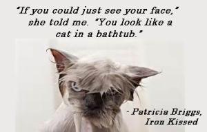quote MT iron kissed cat