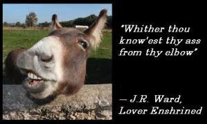 BDB 6 LEnsh donkey